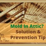 Worrying About Mold in Attic? Remove Attic Mold Effortlessly