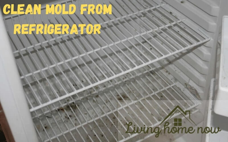 Clean mold from refrigerator