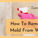 How To Completely Clean Mold From Walls-Like a Professional