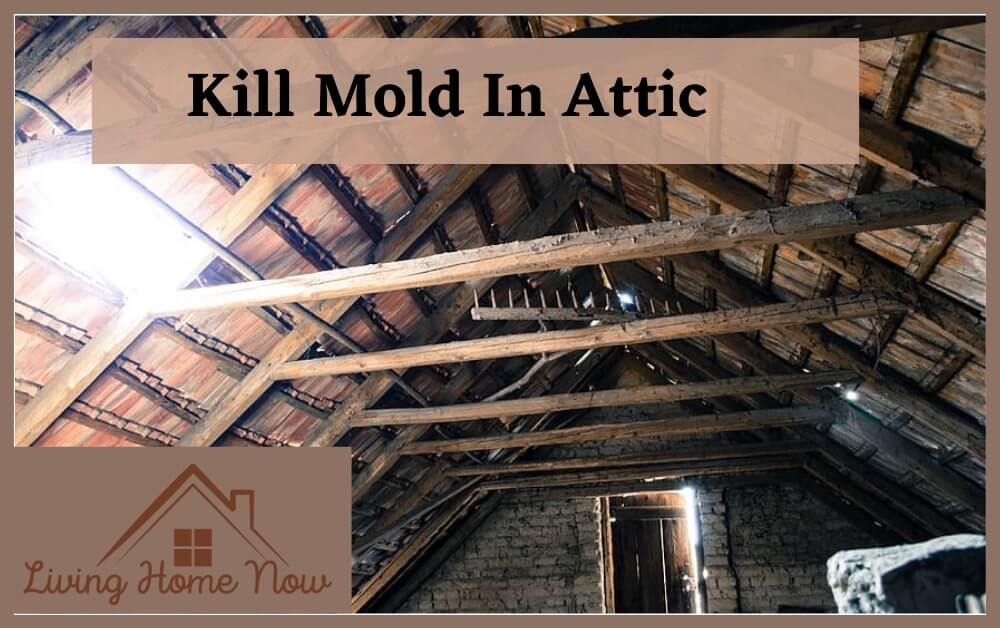 kill mold in attic