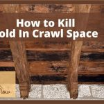 Worrying About Mold in Crawl Space? Here Are Some Best Ways To Get Rid Off Them