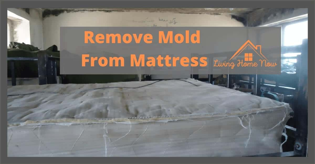 how to remove mold on a mattress