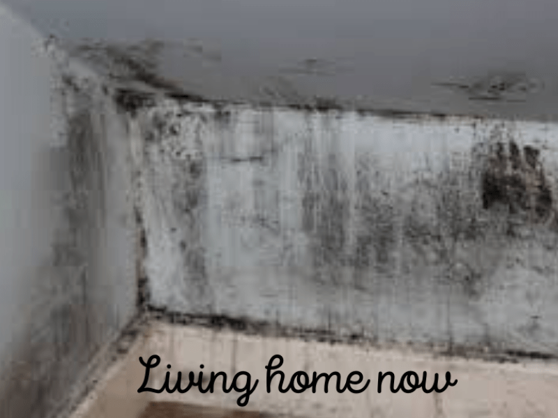 kitchen mold removal