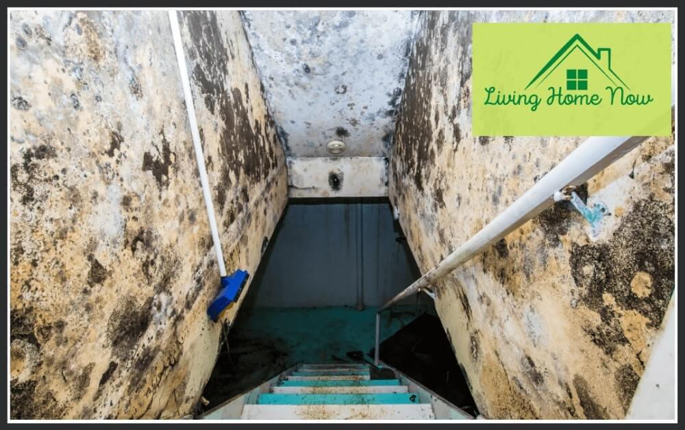 prevent mold in basement