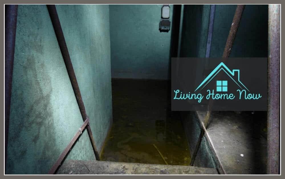 Kill mold in basement
