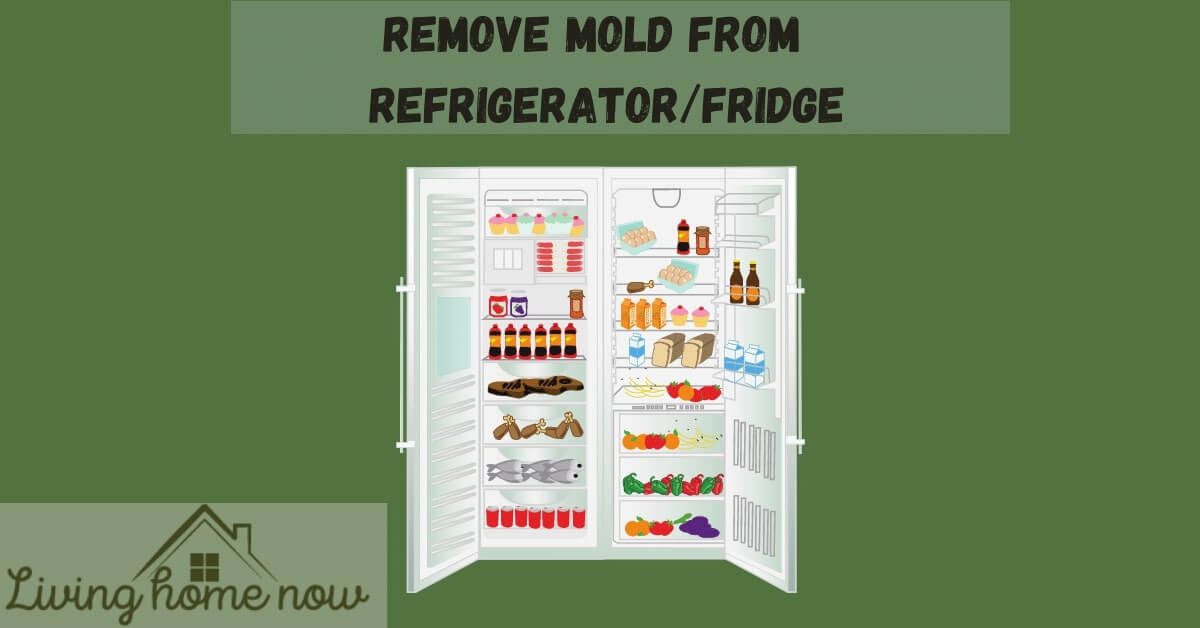 remove mold from refrigerator
