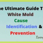 The Ultimate Guide to White mold-Cause, Identification & Prevention