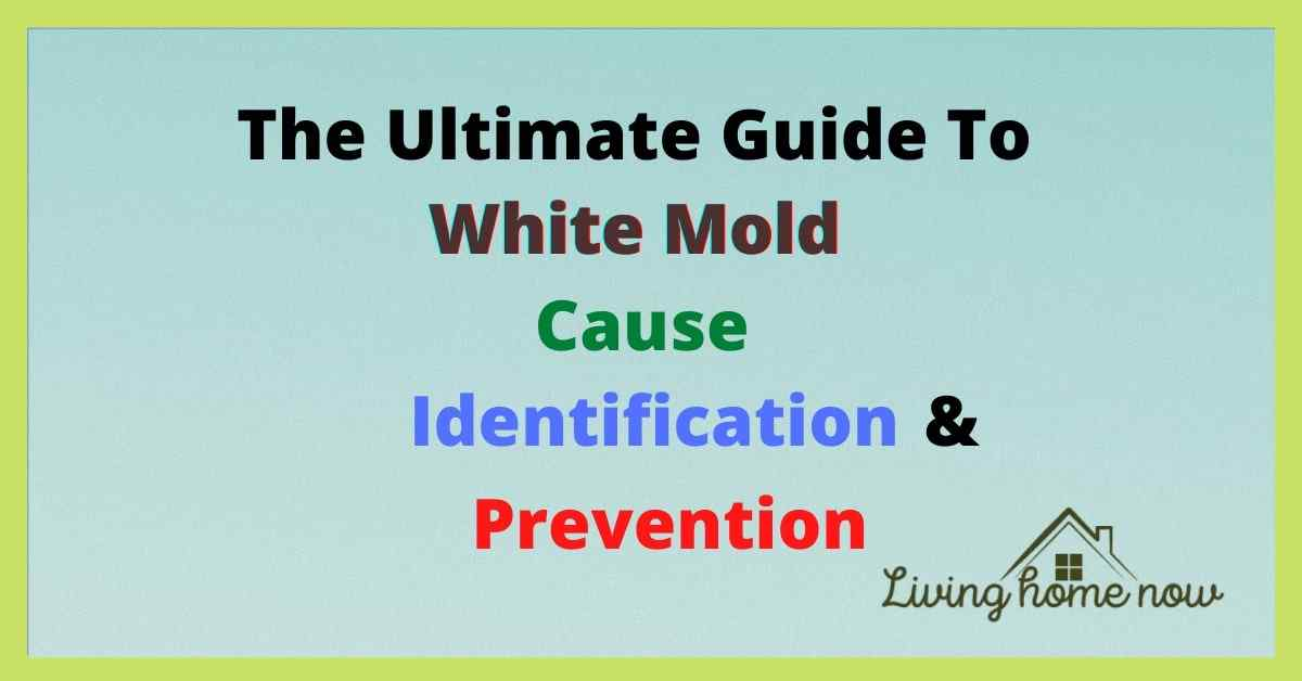 The Ultimate guide to white mold cause, identification Prevention