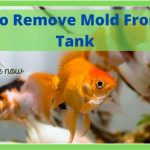How To Remove Mold From Fish Tank-Step By Step