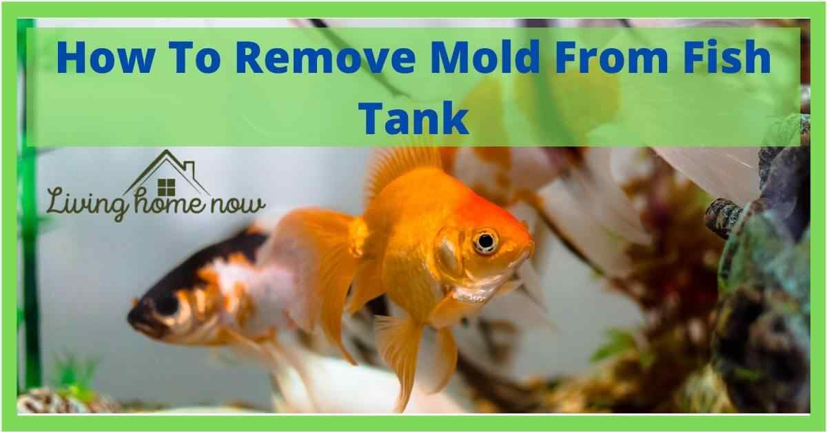 how to clean mold from fish tank
